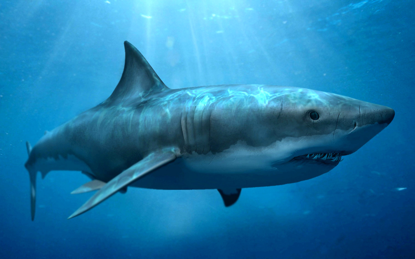 19537 download wallpaper Animals, Sea, Sharks, Fishes screensavers and pictures for free