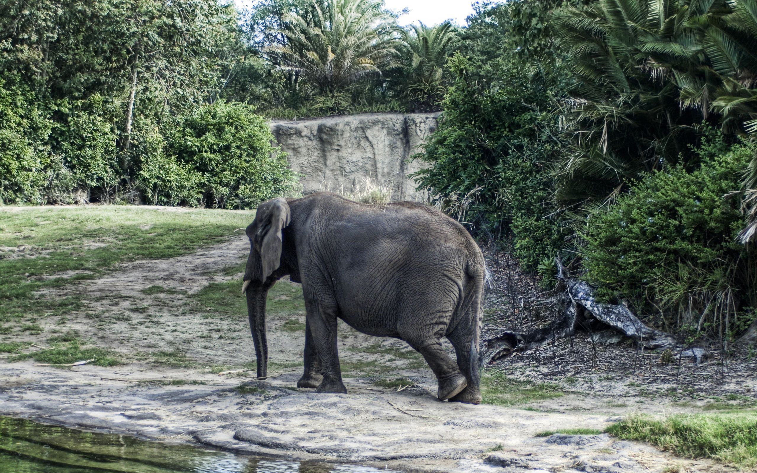 134635 download wallpaper Animals, Elephant, Large, Big, Stroll, Trees screensavers and pictures for free