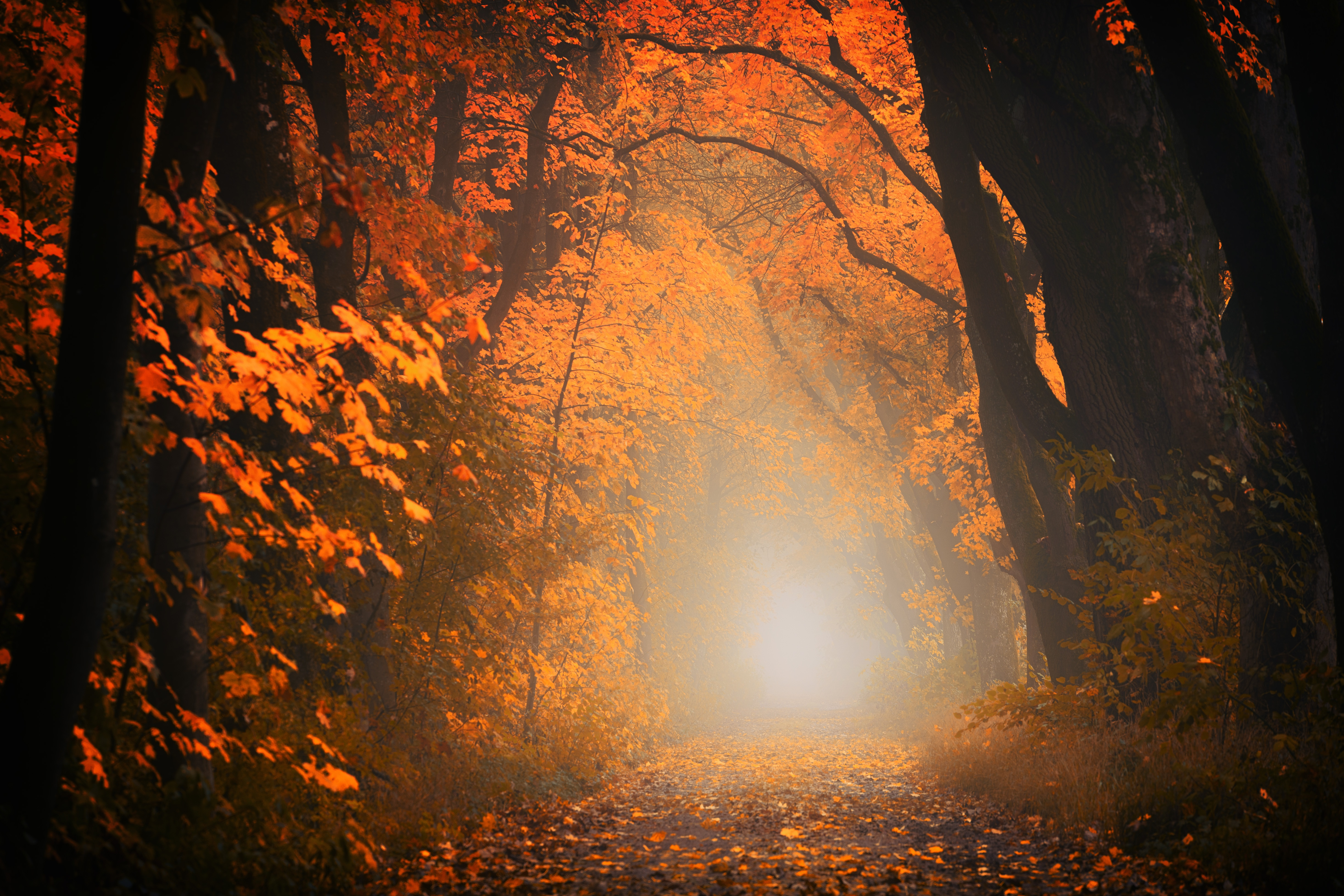 130488 download wallpaper Nature, Trees, Autumn, Forest, Fog, Path, Foliage screensavers and pictures for free