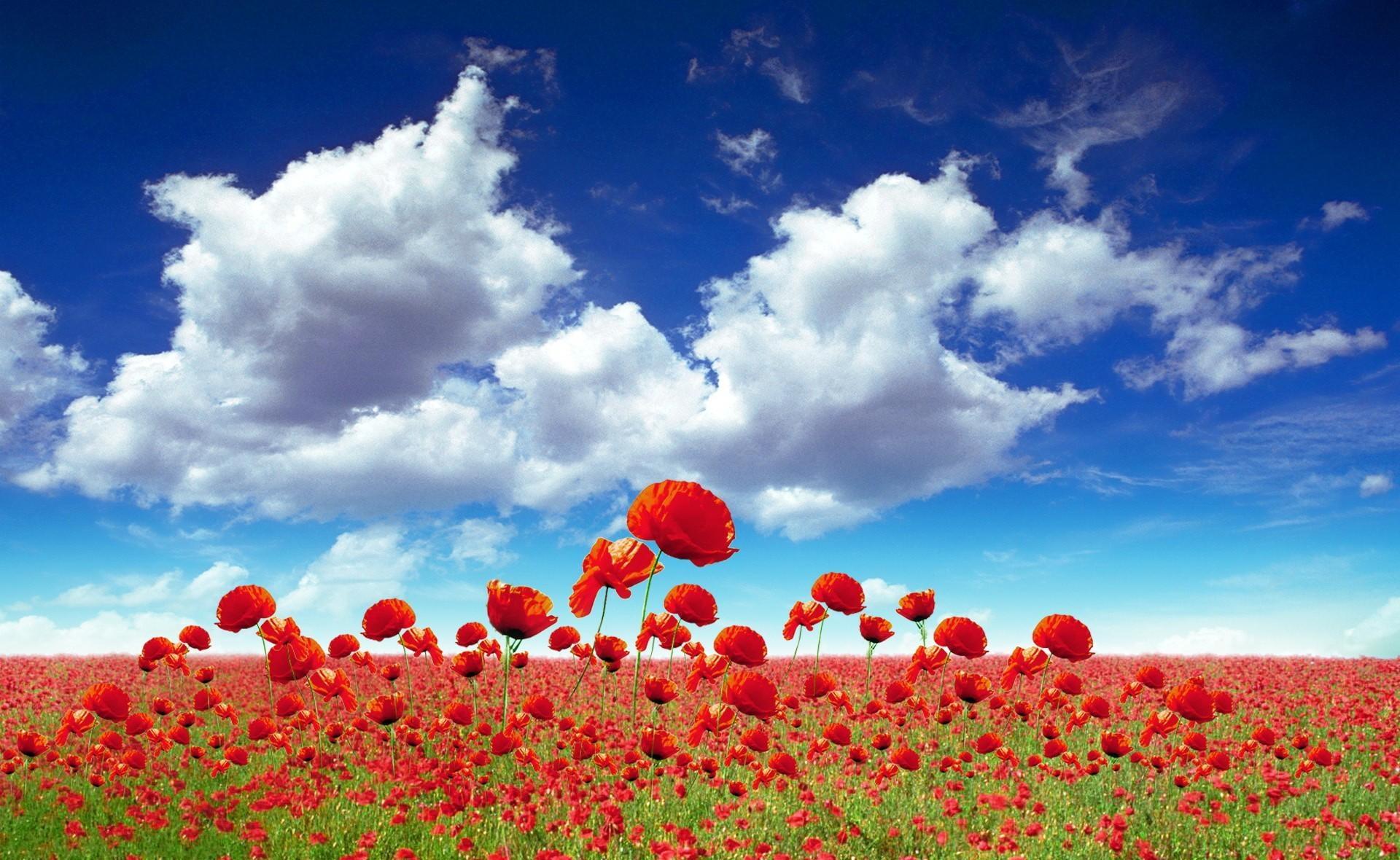 133334 скачать обои Цветы, Маки, Поле, Небо, Облака, Свет - заставки и картинки бесплатно