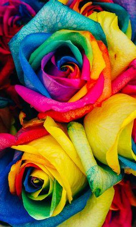 121345 скачать обои Цветы, Разноцветный, Радужный, Розы - заставки и картинки бесплатно