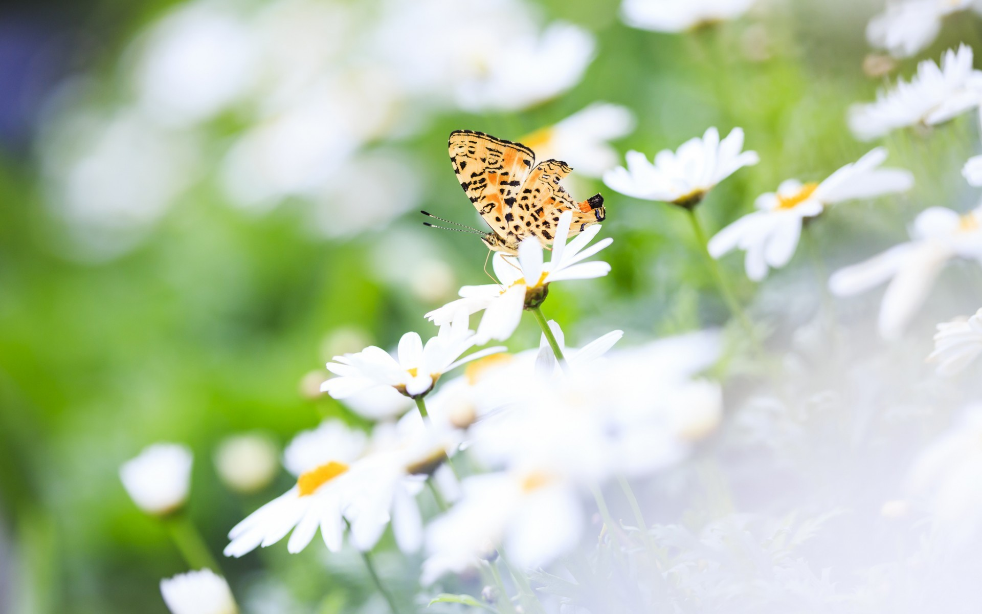39500 Заставки и Обои Бабочки на телефон. Скачать Бабочки, Насекомые картинки бесплатно