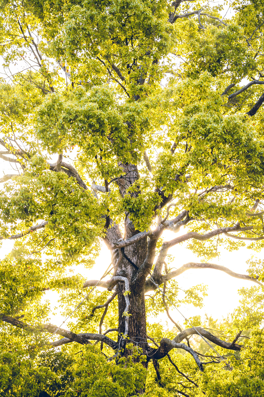 97412壁紙のダウンロード自然, 木材, 木, ブランチ, 枝, 日光, ビーム, 光線, 明るい-スクリーンセーバーと写真を無料で