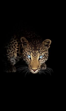 19648 download wallpaper Animals, Leopards screensavers and pictures for free