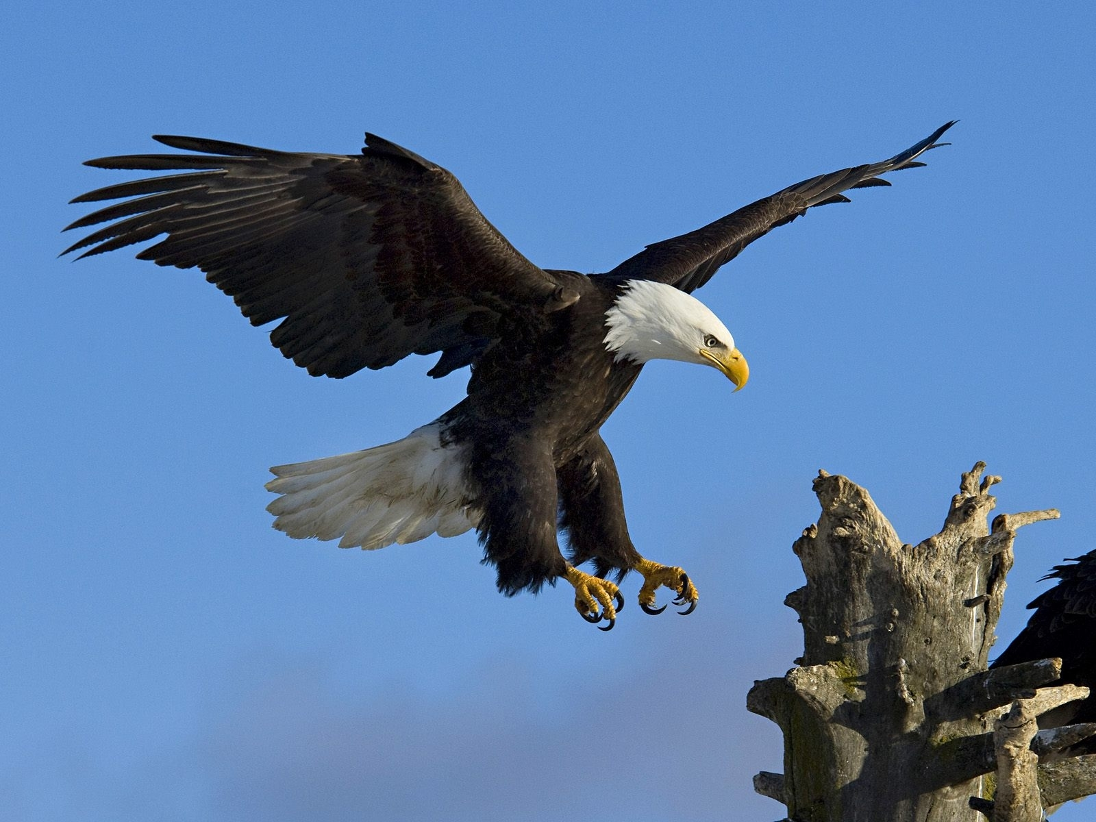 6971 download wallpaper Animals, Birds, Eagles screensavers and pictures for free