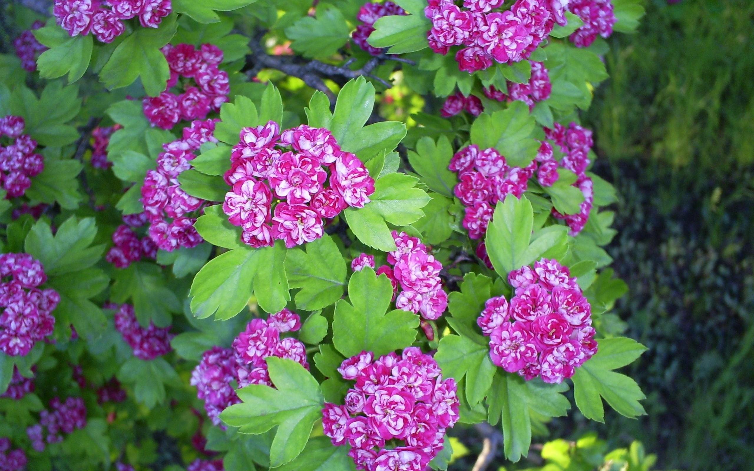 2441 скачать обои Растения, Цветы - заставки и картинки бесплатно