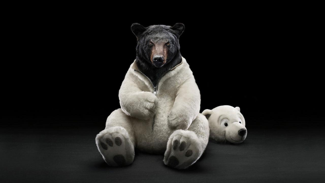 35666 скачать обои Юмор, Животные, Медведи - заставки и картинки бесплатно