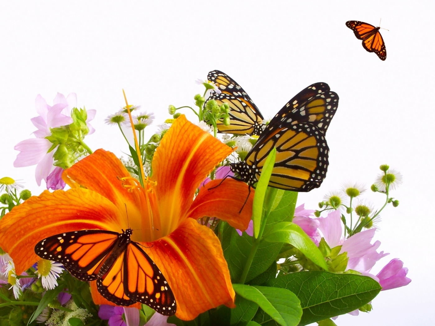 40279 download wallpaper Insects, Butterflies screensavers and pictures for free