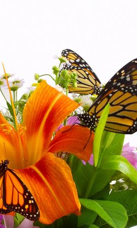 40279 Screensavers and Wallpapers Insects for phone. Download Butterflies, Insects pictures for free