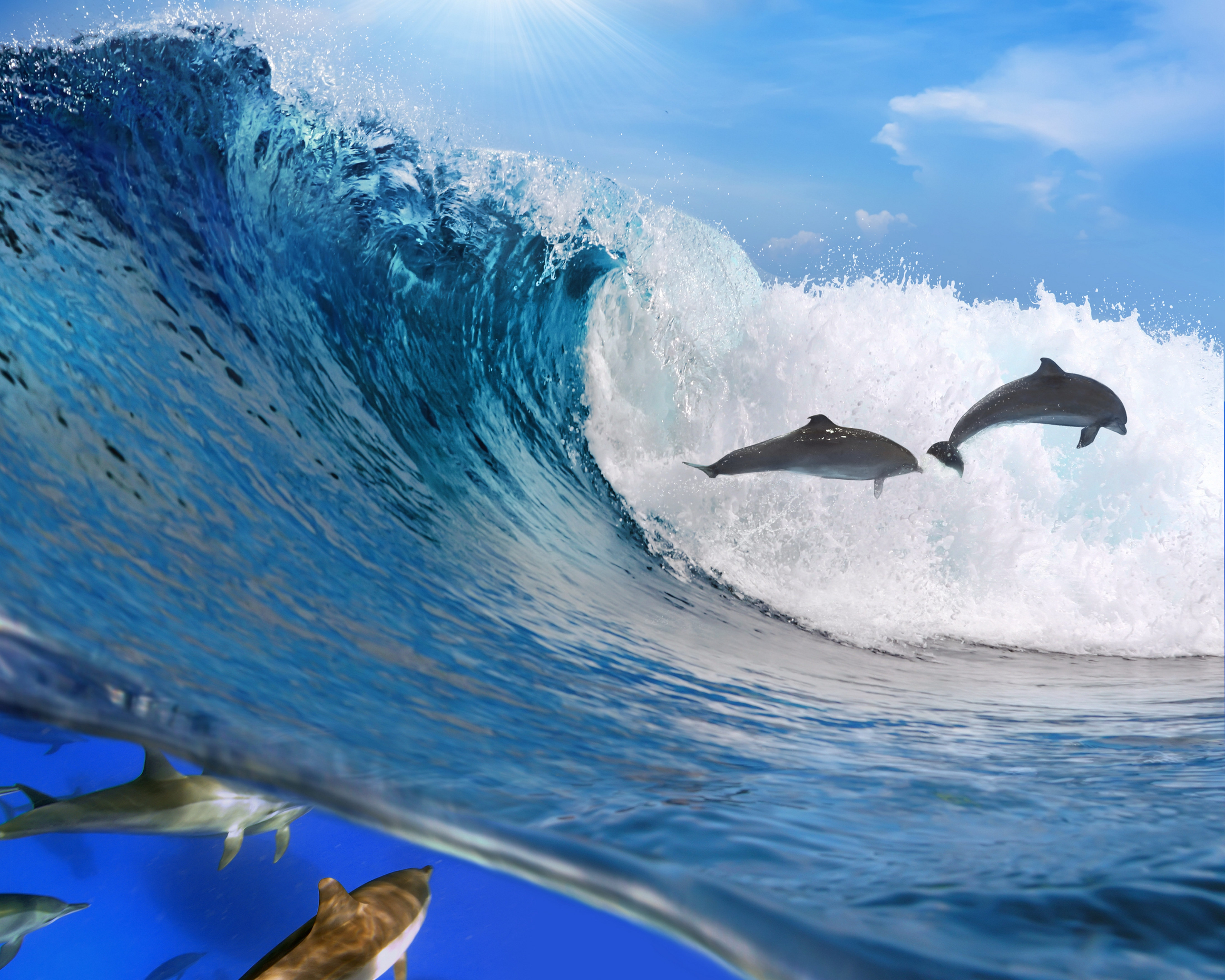 69189 download wallpaper Dolfins, Animals, Ocean, Wave, Freedom screensavers and pictures for free