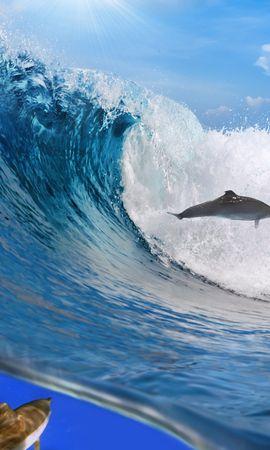 69189 baixar papel de parede Animais, Oceano, Aceno, Onda, Liberdade, Golfinhos - protetores de tela e imagens gratuitamente
