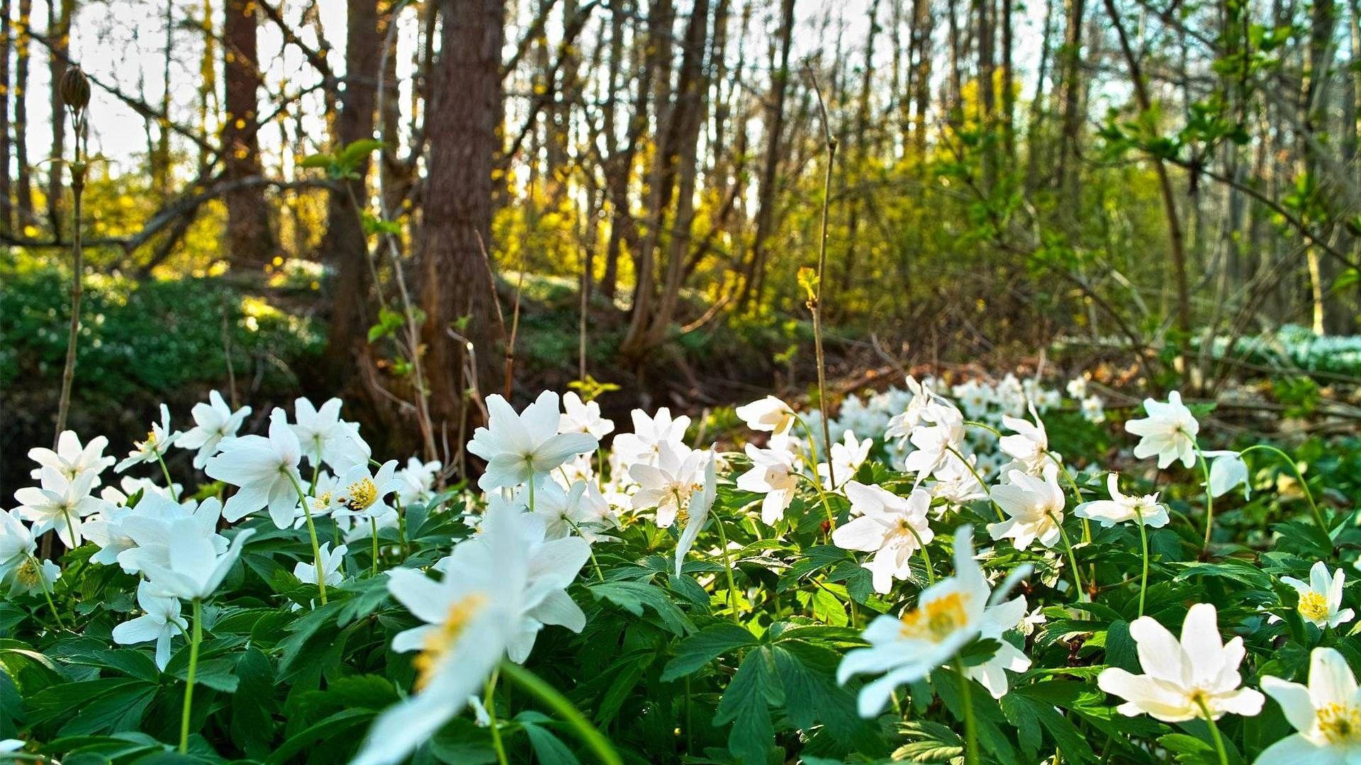 97550 Salvapantallas y fondos de pantalla Flores en tu teléfono. Descarga imágenes de Hierba, Naturaleza, Flores gratis