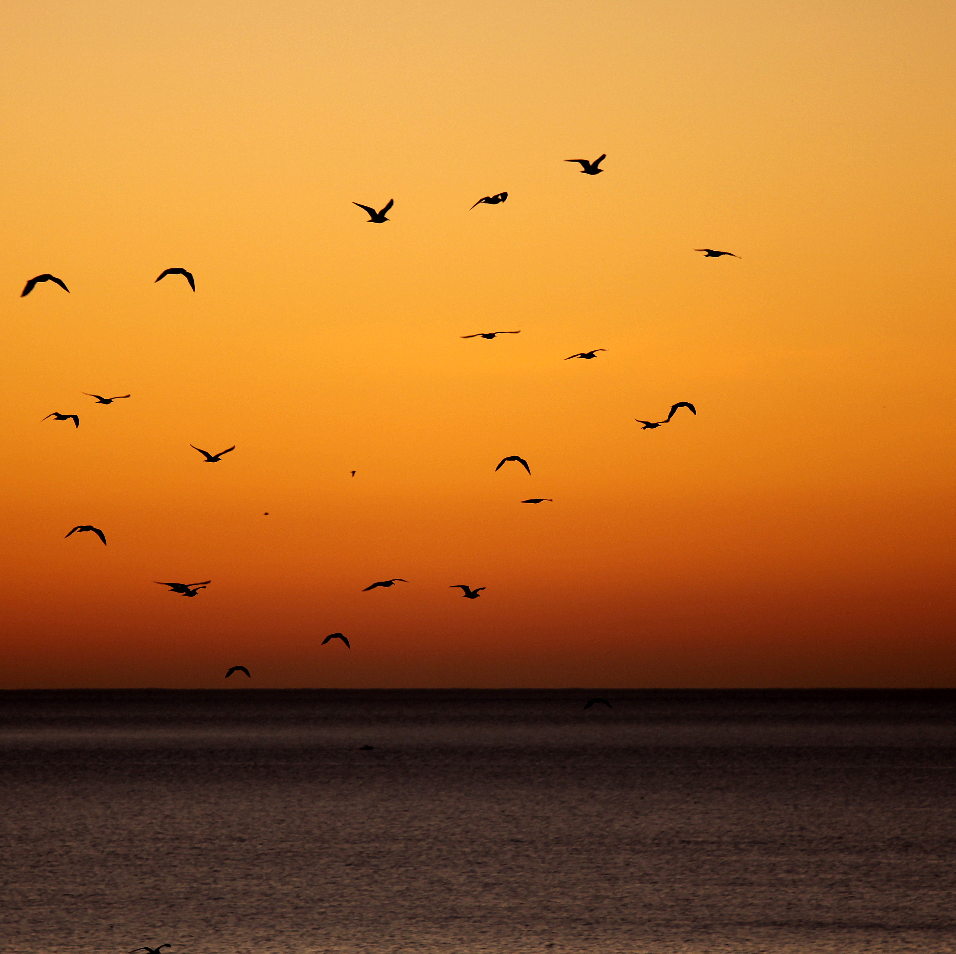 128136 download wallpaper Dark, Sunset, Sea, Horizon, Birds screensavers and pictures for free
