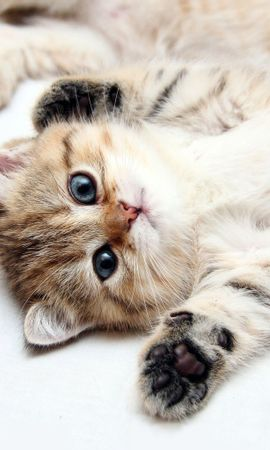 10078 download wallpaper Animals, Cats screensavers and pictures for free