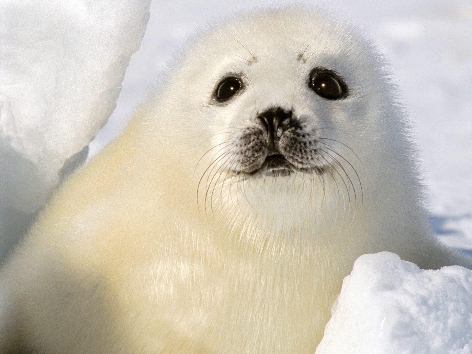 135014 download wallpaper Animals, Seal, Funny, Kid, Tot screensavers and pictures for free