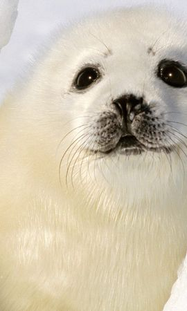 135014 Screensavers and Wallpapers Funny for phone. Download Animals, Seal, Funny, Kid, Tot pictures for free