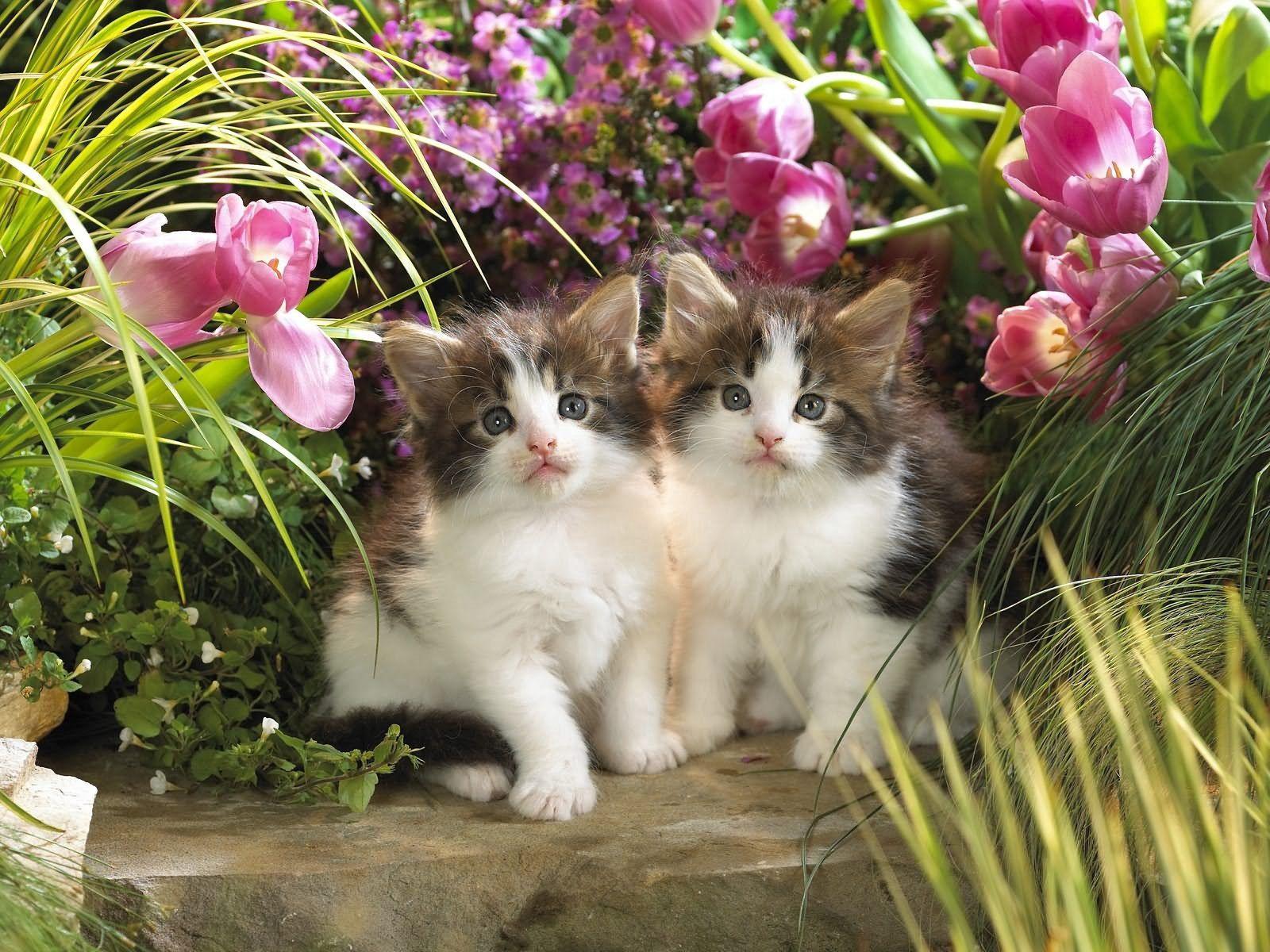 111311 скачать обои Животные, Котята, Пара, Трава, Цветы - заставки и картинки бесплатно