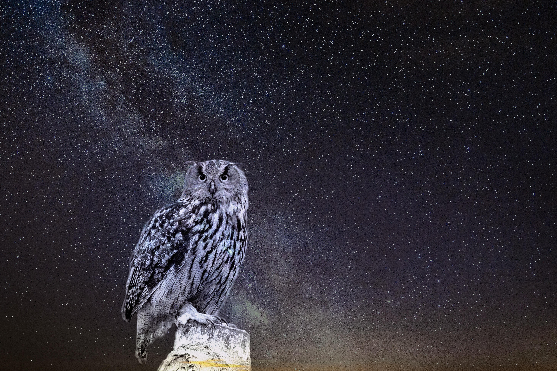 68683 Hintergrundbild herunterladen Eule, Tiere, Sternenhimmel, Photoshop - Bildschirmschoner und Bilder kostenlos