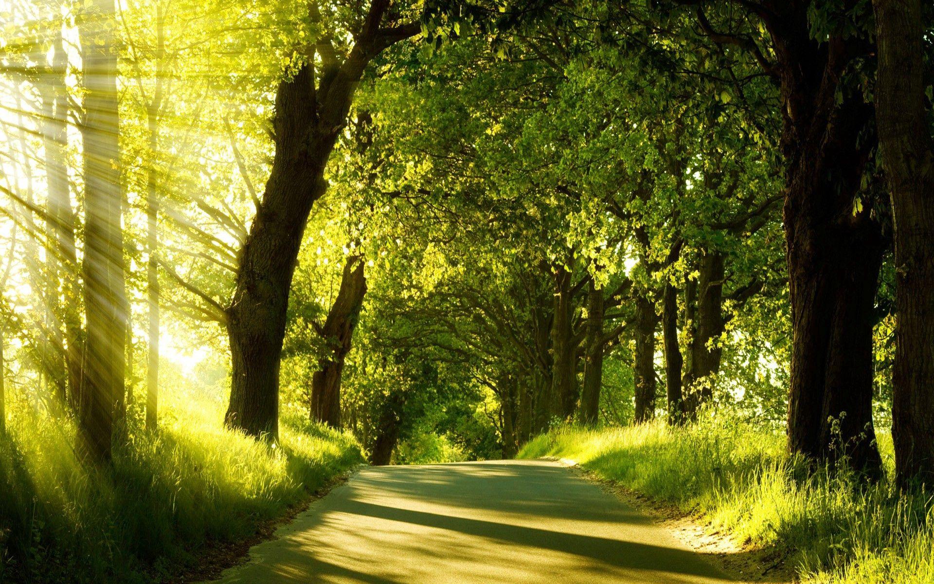 151738壁紙のダウンロード自然, 道路, 道, 木, 日光, ビーム, 光線, グリーンズ, 菜, 夏-スクリーンセーバーと写真を無料で