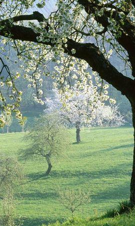 557 скачать обои Растения, Пейзаж, Цветы, Деревья - заставки и картинки бесплатно