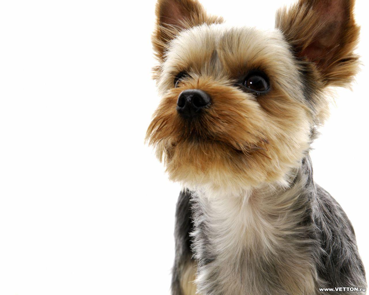 23126 скачать обои Животные, Собаки - заставки и картинки бесплатно