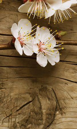 17438 скачать обои Растения, Цветы, Деревья, Фон - заставки и картинки бесплатно