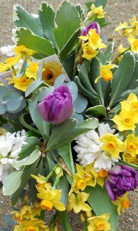 123814 télécharger le fond d'écran Fleurs, Bouquet, Feuilles, Noter, Note, Tulipes, Narcisses - économiseurs d'écran et images gratuitement