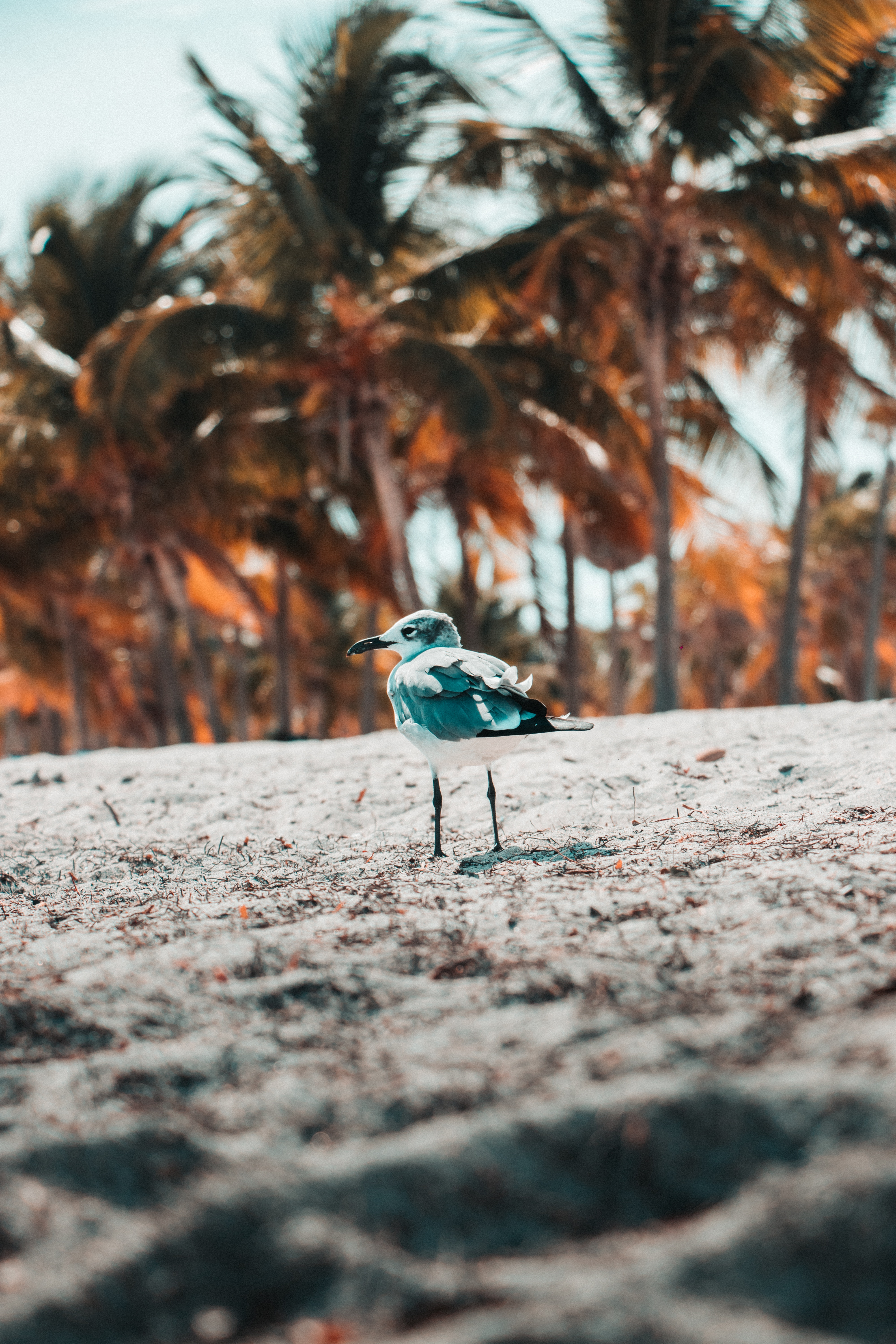 53365 download wallpaper Animals, Gull, Seagull, Bird, Sand, Blur, Smooth screensavers and pictures for free