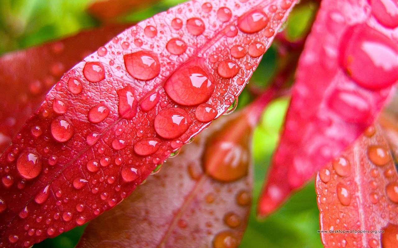 7927 download wallpaper Plants, Background, Leaves, Drops screensavers and pictures for free