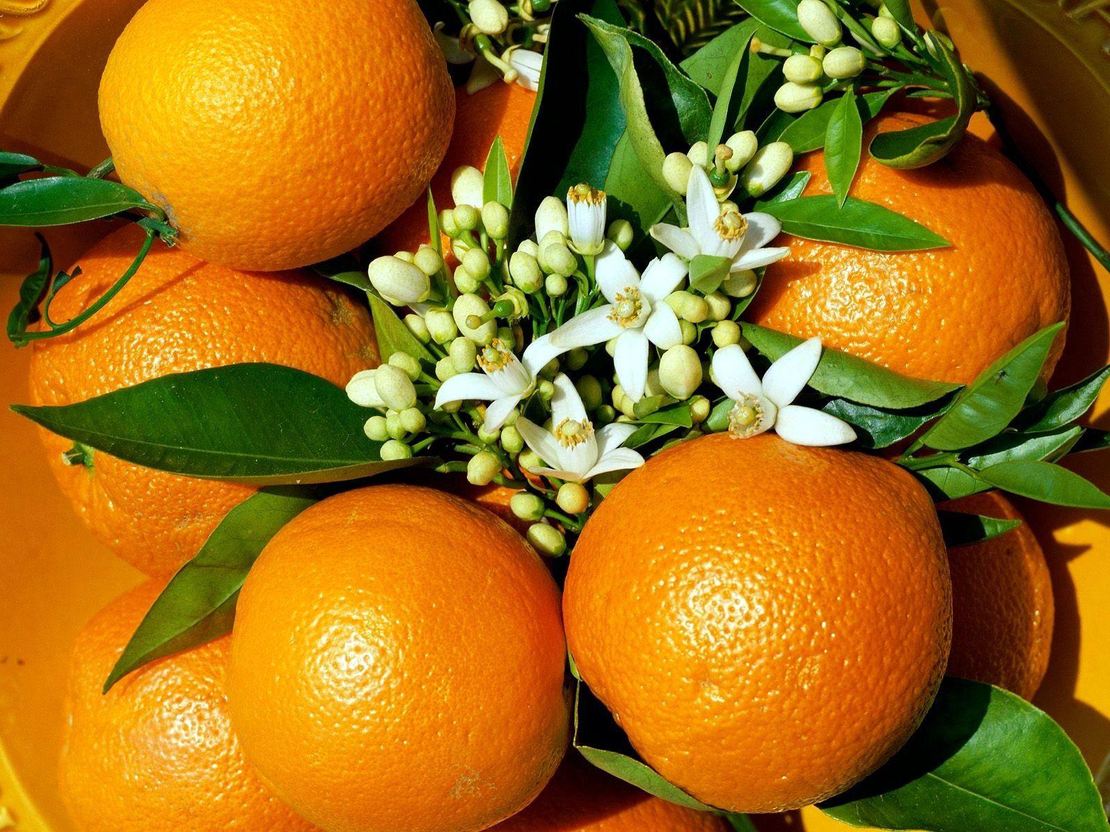 106849 скачать обои Еда, Трава, Цветы, Апельсины - заставки и картинки бесплатно