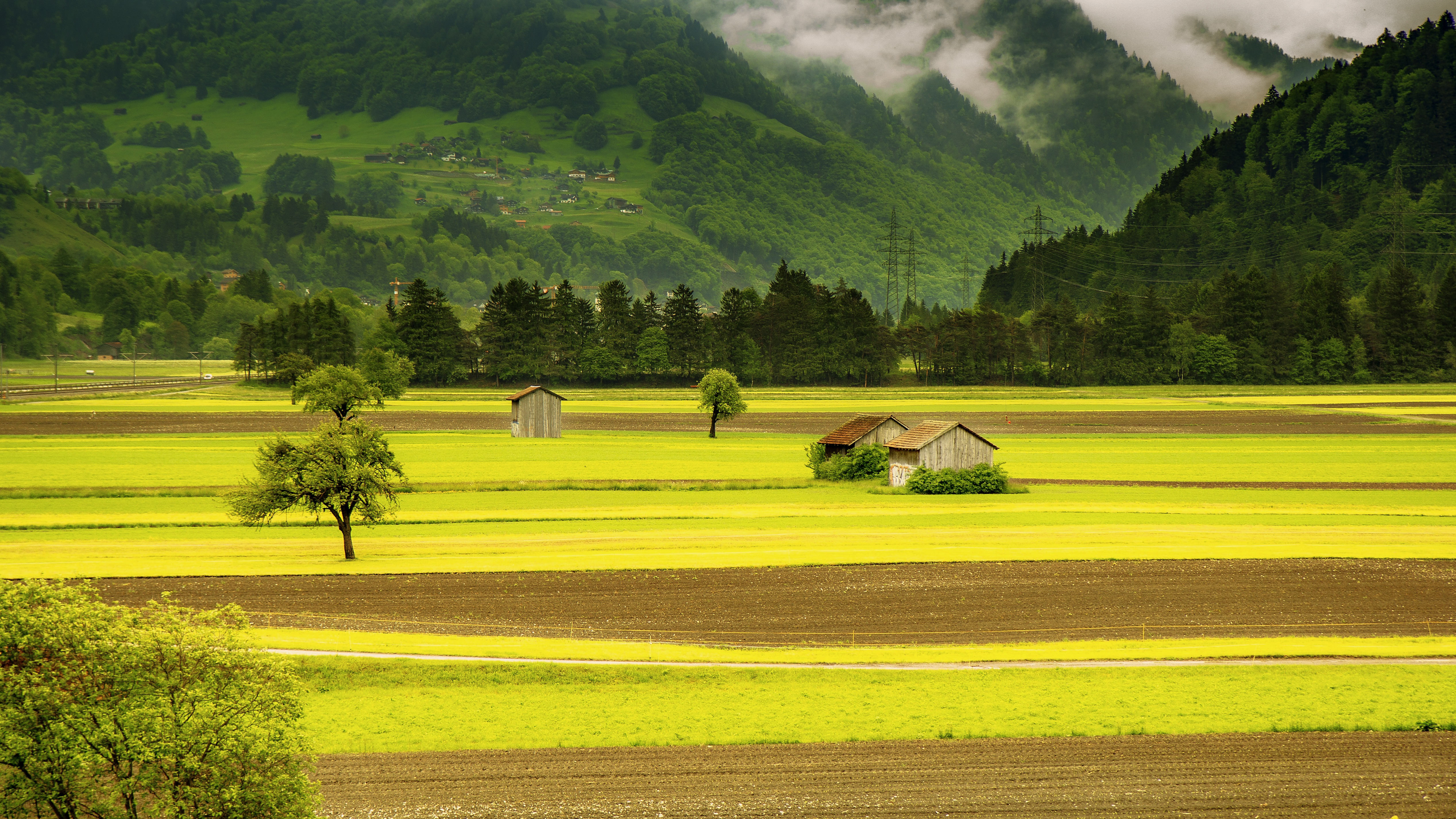 137916 download wallpaper Grass, Nature, Trees, Sky, Meadow screensavers and pictures for free