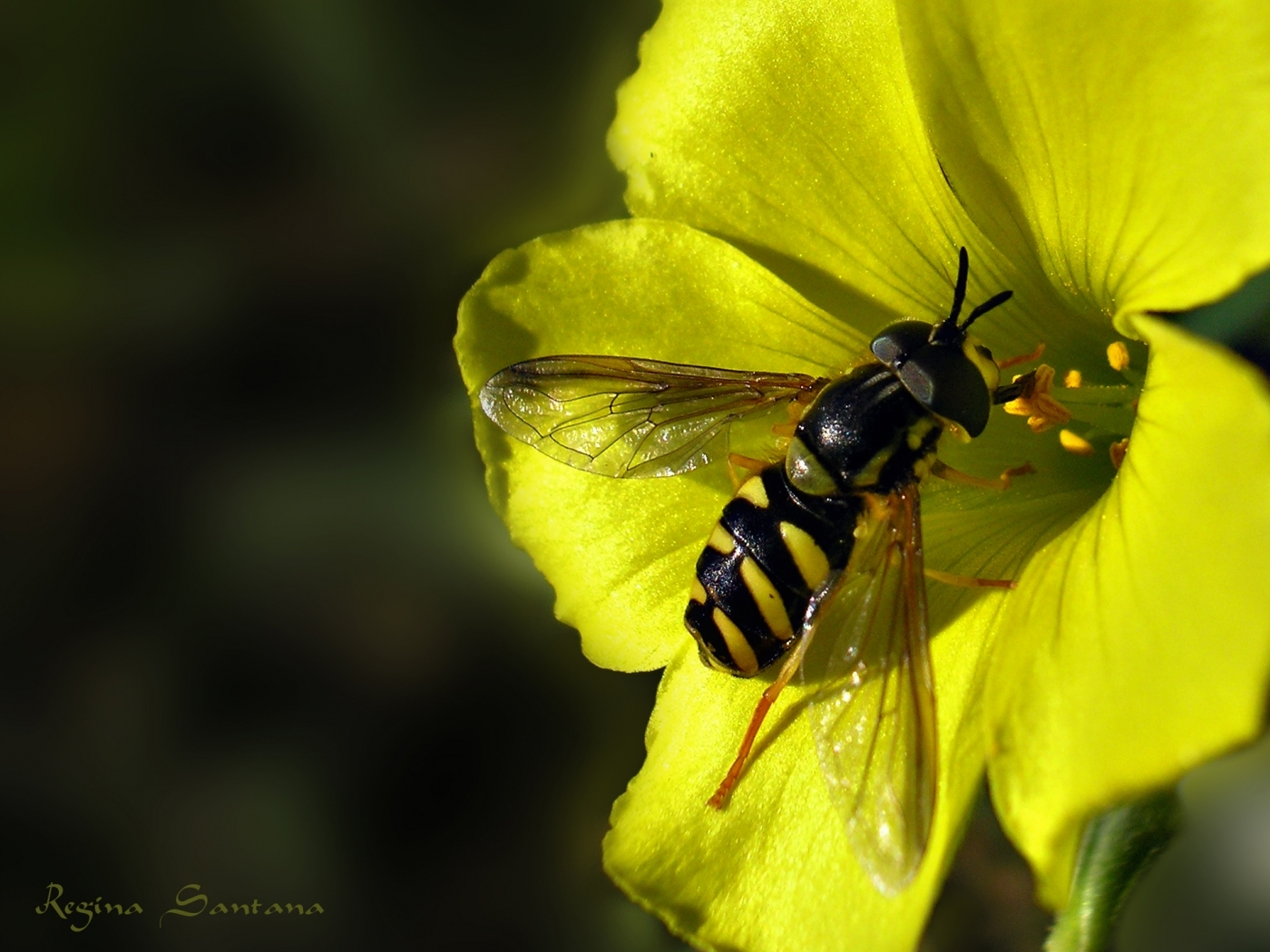 26792 Screensavers and Wallpapers Bees for phone. Download Insects, Bees pictures for free