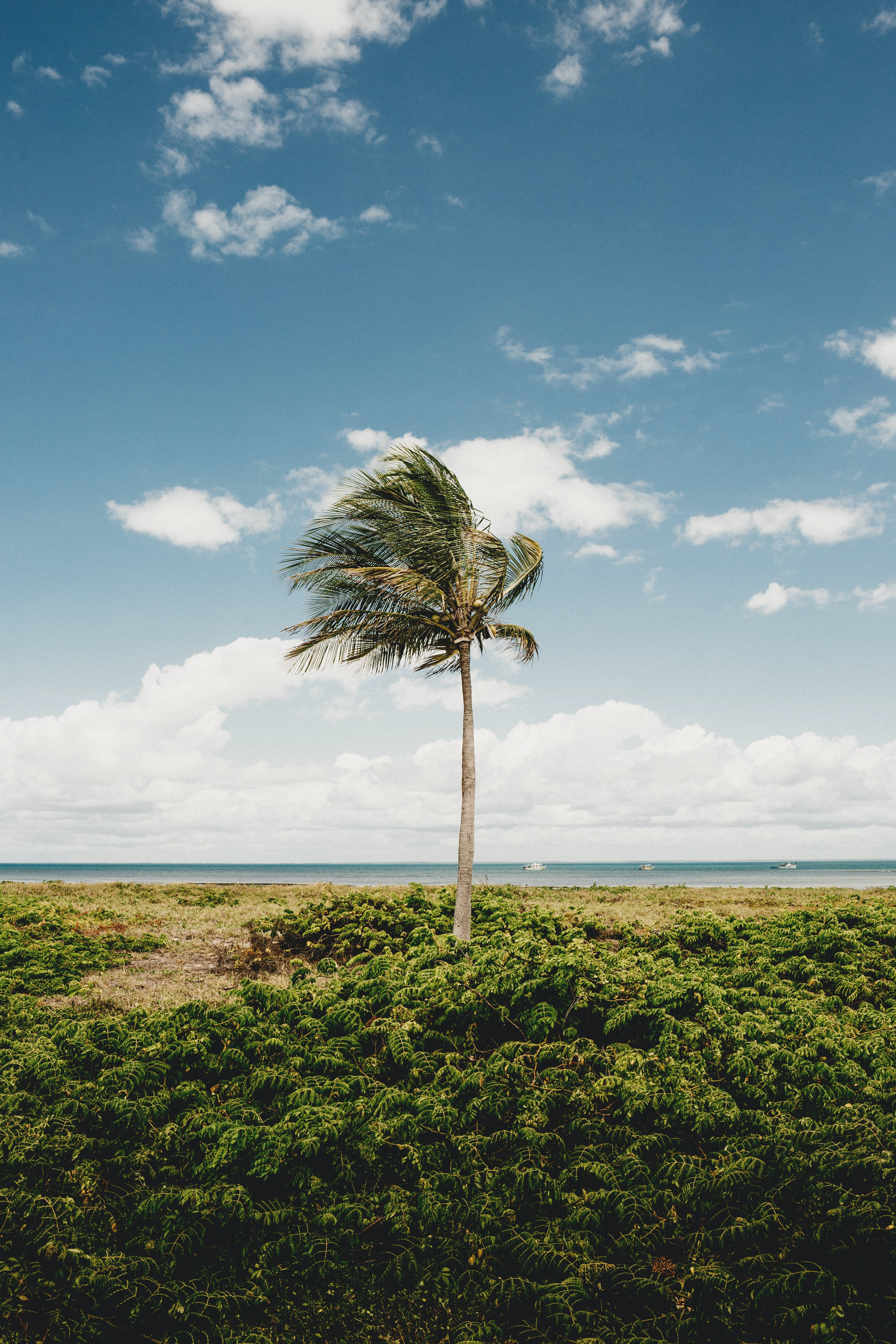 76858 download wallpaper Palm, Wood, Tree, Coast, Tropics, Nature screensavers and pictures for free