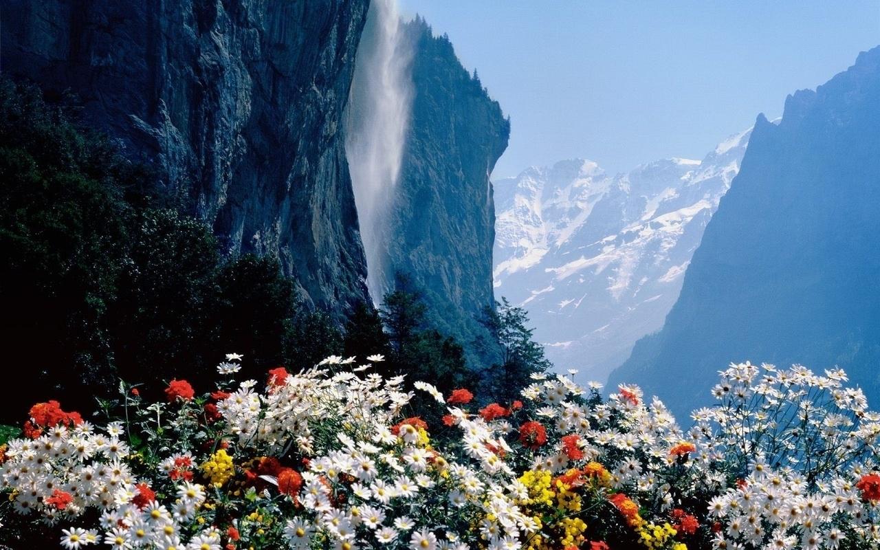 44764 télécharger le fond d'écran Plantes, Paysage, Nature, Fleurs, Montagnes - économiseurs d'écran et images gratuitement