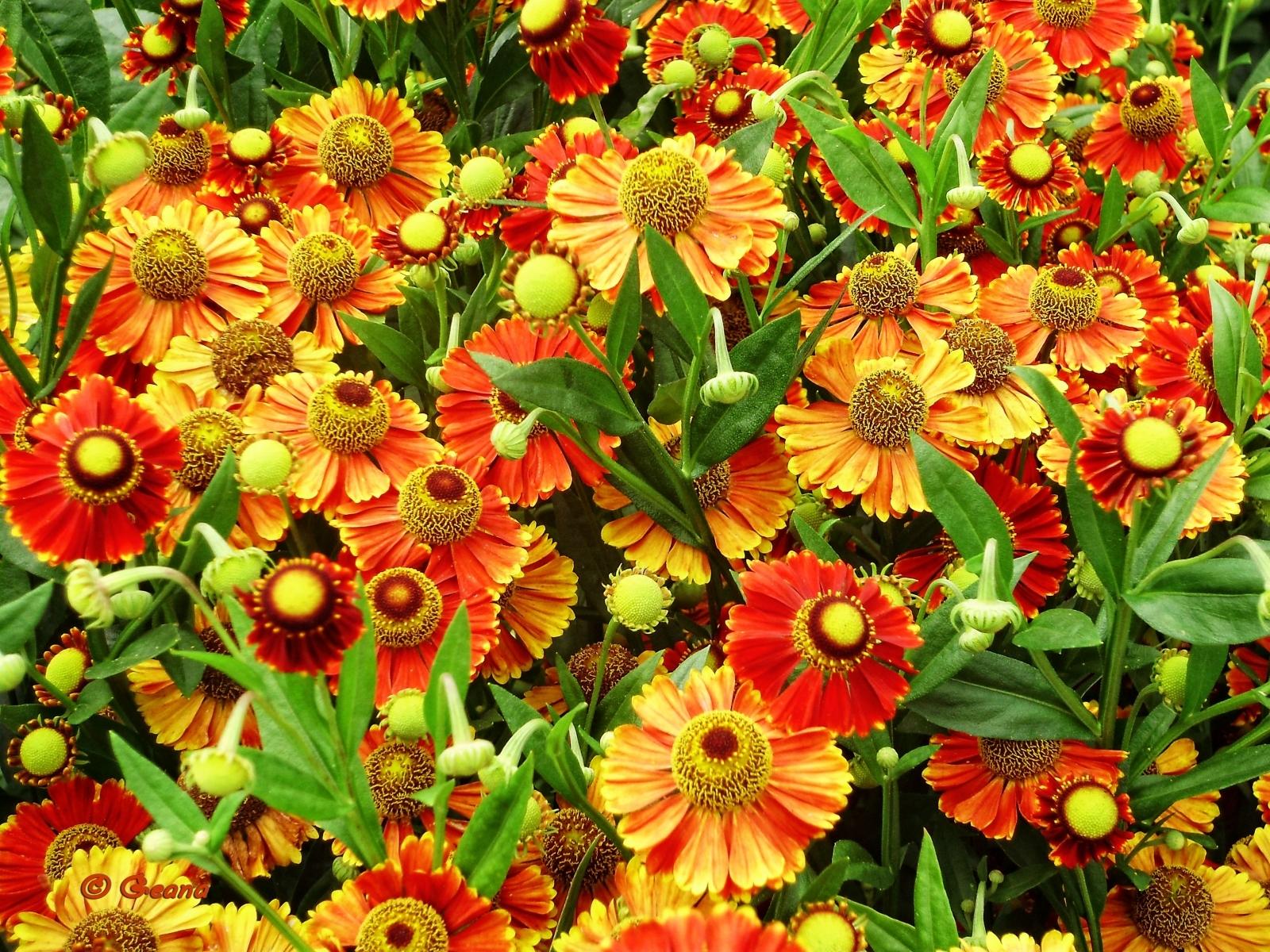 9138 скачать обои Растения, Цветы, Фон - заставки и картинки бесплатно