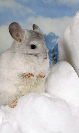 8751 baixar papel de parede Animais, Hamsters, Roedores - protetores de tela e imagens gratuitamente