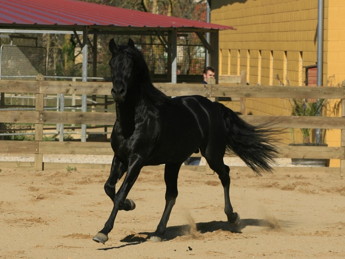 495 скачать обои Лошади, Животные - заставки и картинки бесплатно