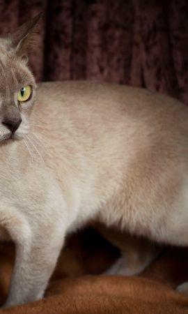24904 скачать обои Животные, Кошки (Коты, Котики) - заставки и картинки бесплатно