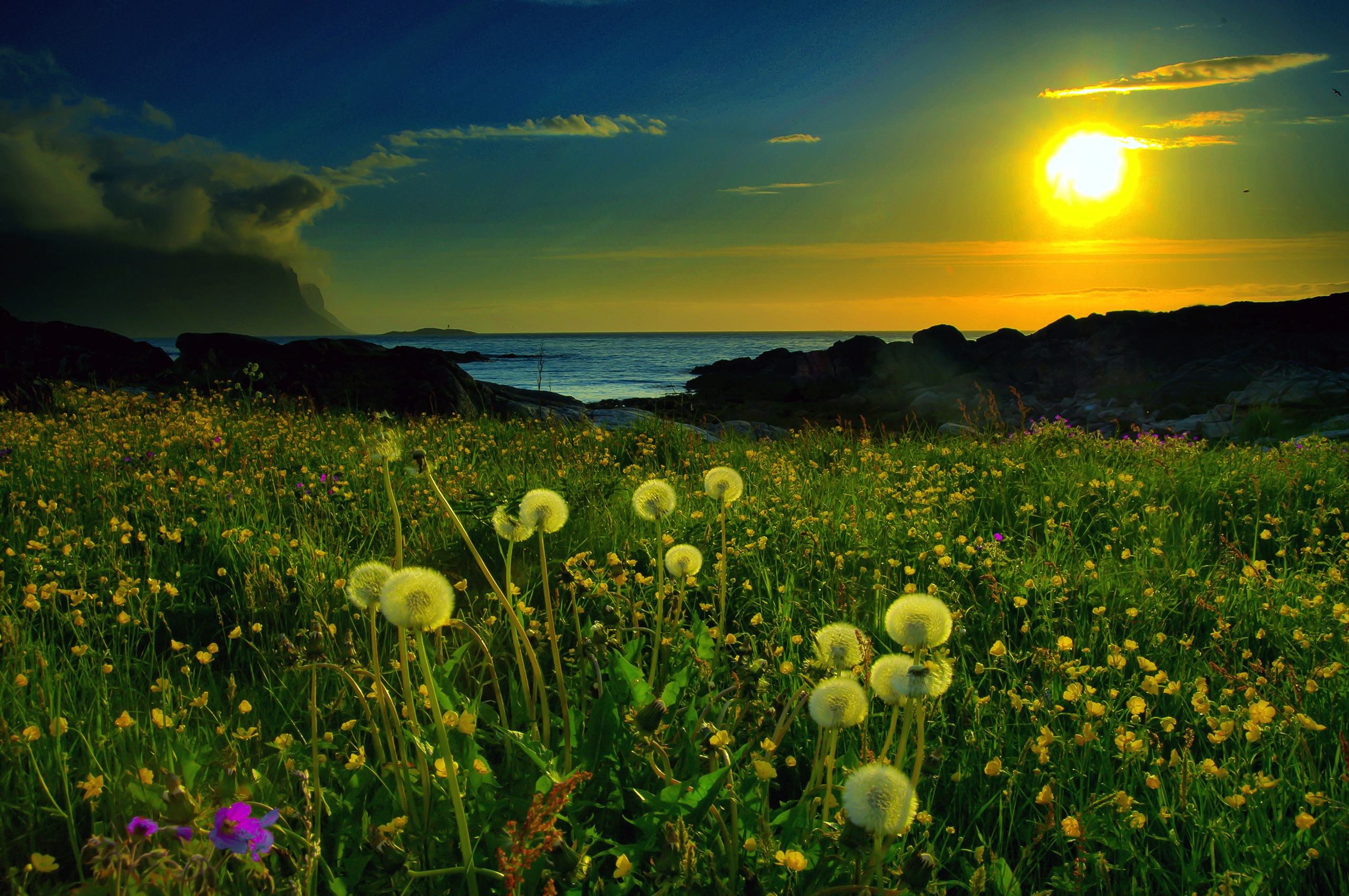 103760 download wallpaper Flowers, Nature, Sunset, Sun, Dandelions, Field screensavers and pictures for free
