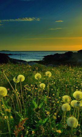 103760 скачать обои Природа, Закат, Одуванчики, Поле, Солнце, Цветы - заставки и картинки бесплатно