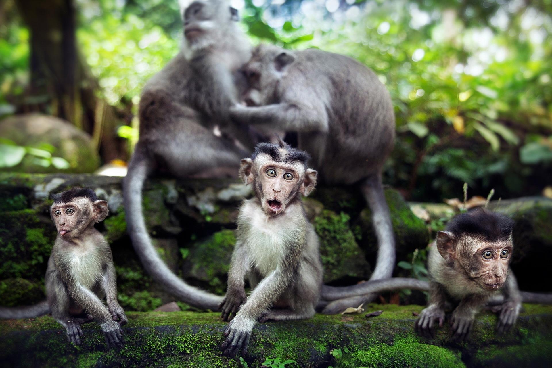 156967 Screensavers and Wallpapers Monkeys for phone. Download Animals, Stones, Monkeys, Family, Moss pictures for free