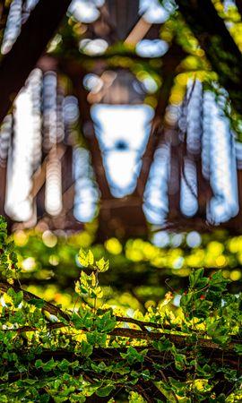 58994 descargar fondo de pantalla Macro, Hojas, Plantas, Sucursales, Ramas, Destello, Deslumbramiento, Borrosidad, Suave: protectores de pantalla e imágenes gratis