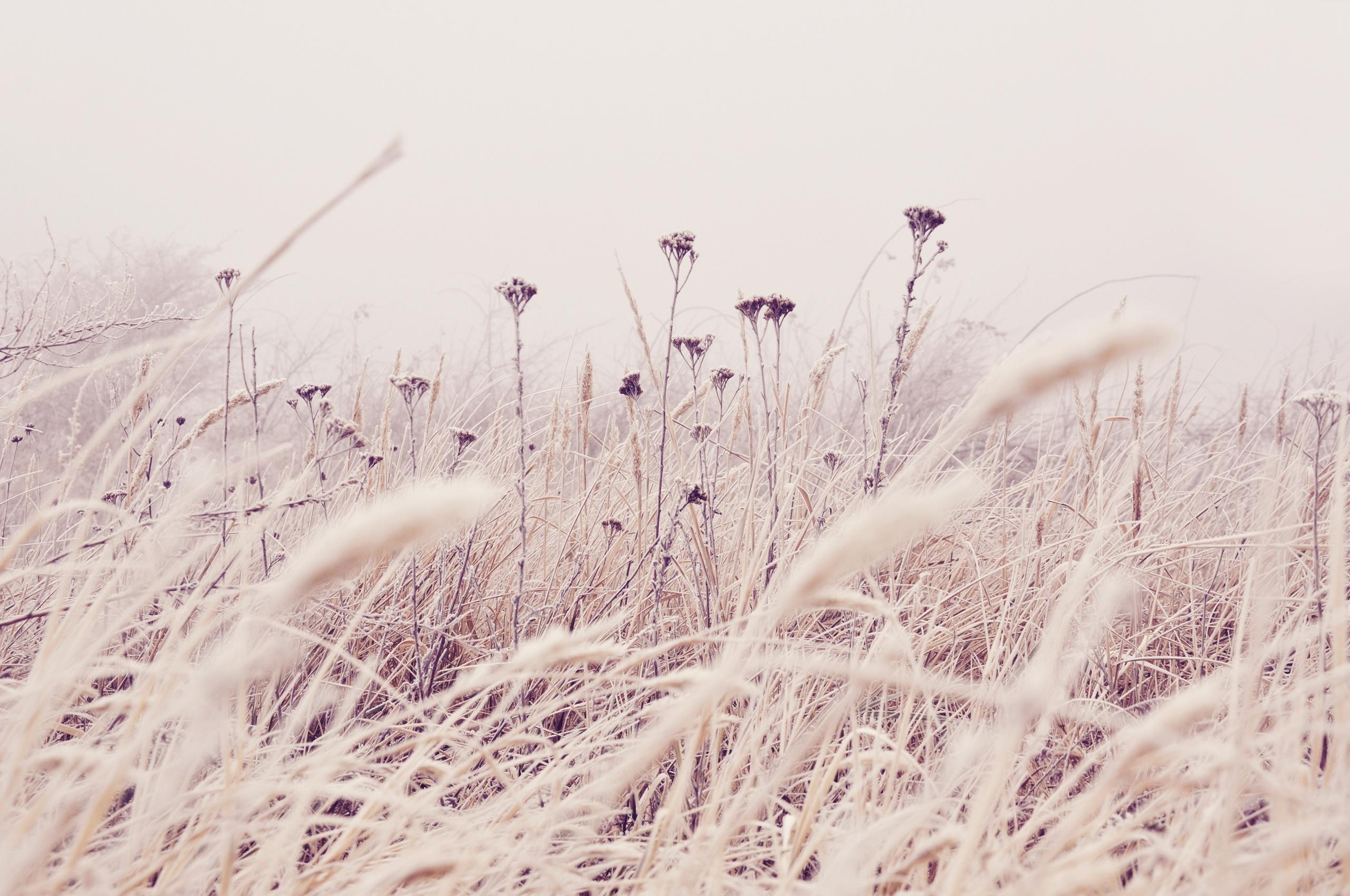 141144 скачать обои Макро, Растения, Стебли, Поле, Трава, Природа, Цветы - заставки и картинки бесплатно