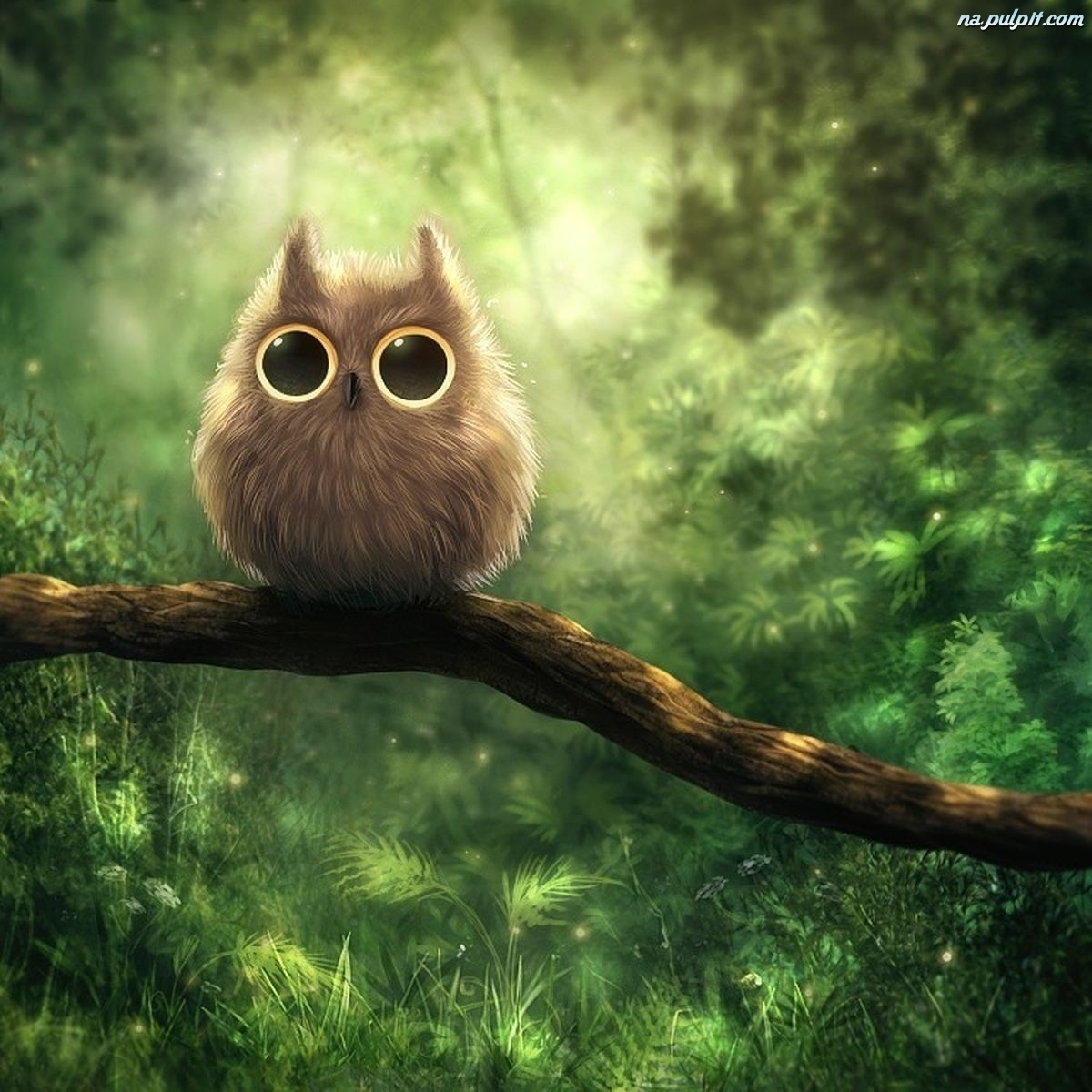 22257 download wallpaper Birds, Owl, Pictures screensavers and pictures for free