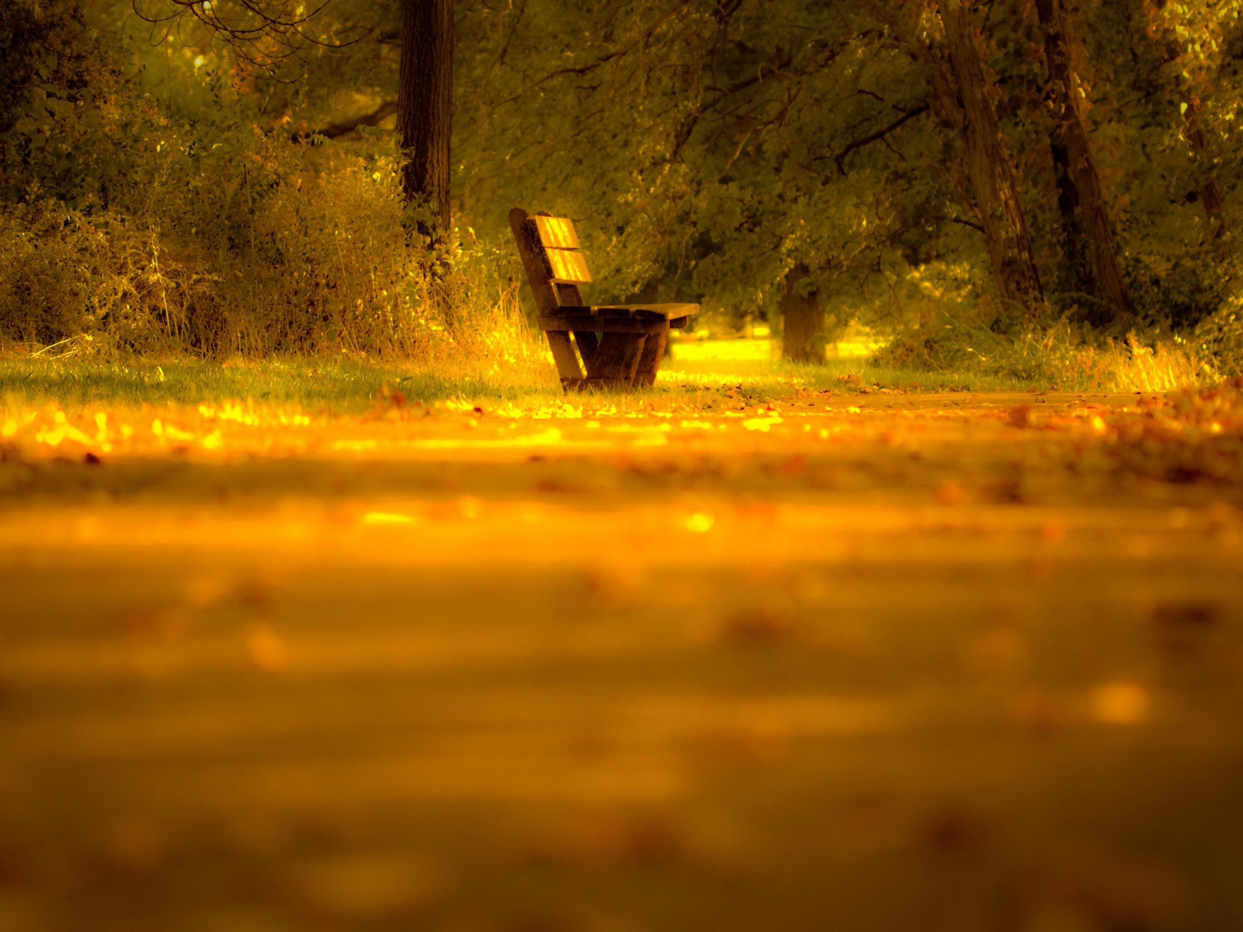 101028 Lade kostenlos Gelb Hintergrundbilder für dein Handy herunter, Natur, Bank, Unschärfe, Verwischen, Einsam Gelb Bilder und Bildschirmschoner für dein Handy