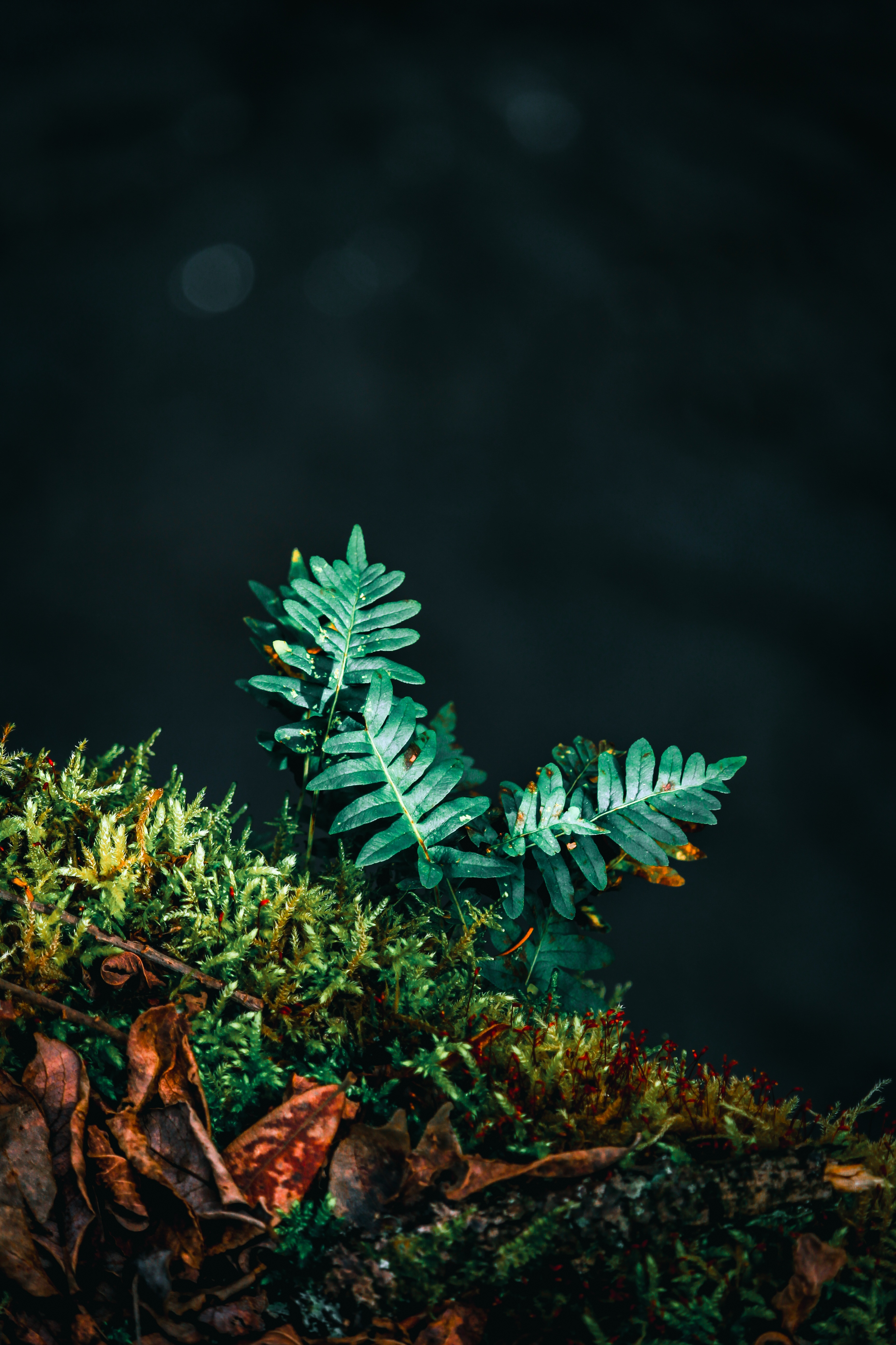 148576 download wallpaper Leaves, Plant, Macro, Fern, Carved screensavers and pictures for free