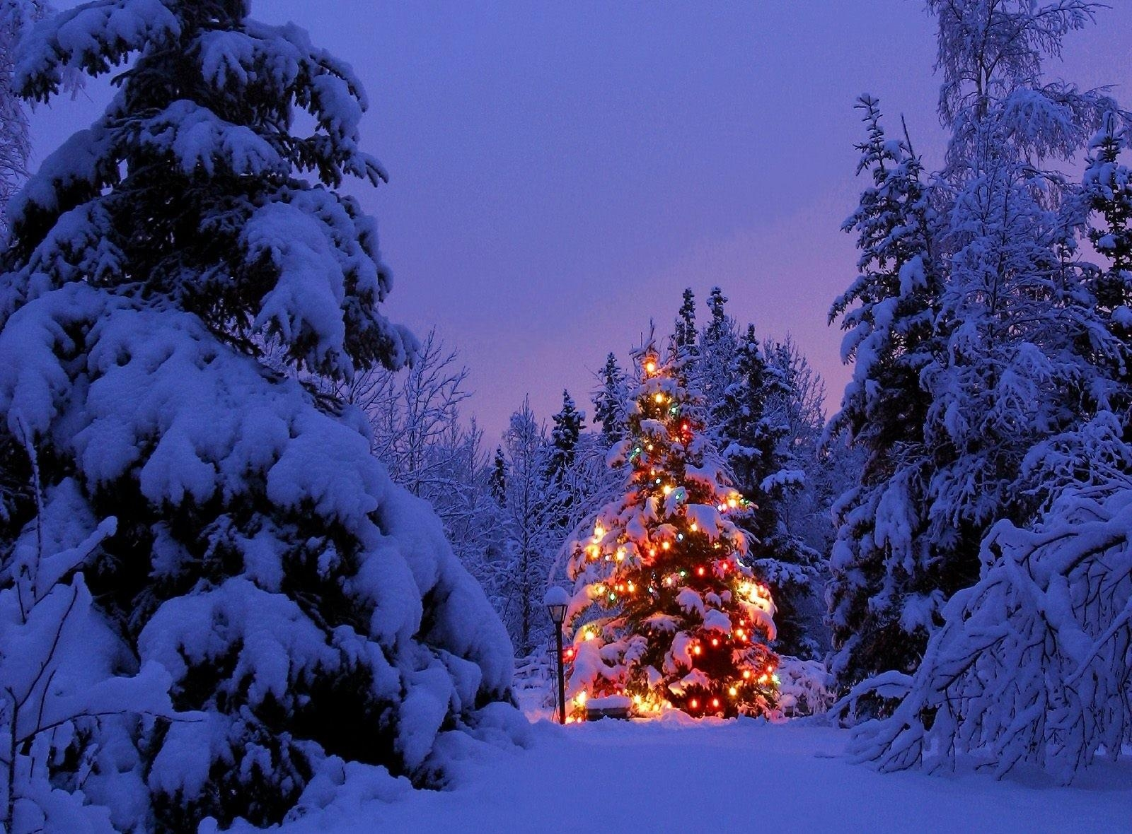 142741 скачать обои Праздники, Гирлянда, Снег, Парк, Вечер, Новый Год, Елки - заставки и картинки бесплатно