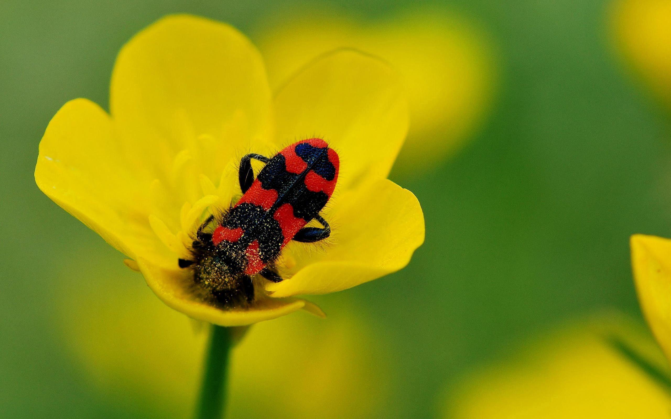 71388 Salvapantallas y fondos de pantalla Insectos en tu teléfono. Descarga imágenes de Macro, Insectos, Pétalos, Flor gratis