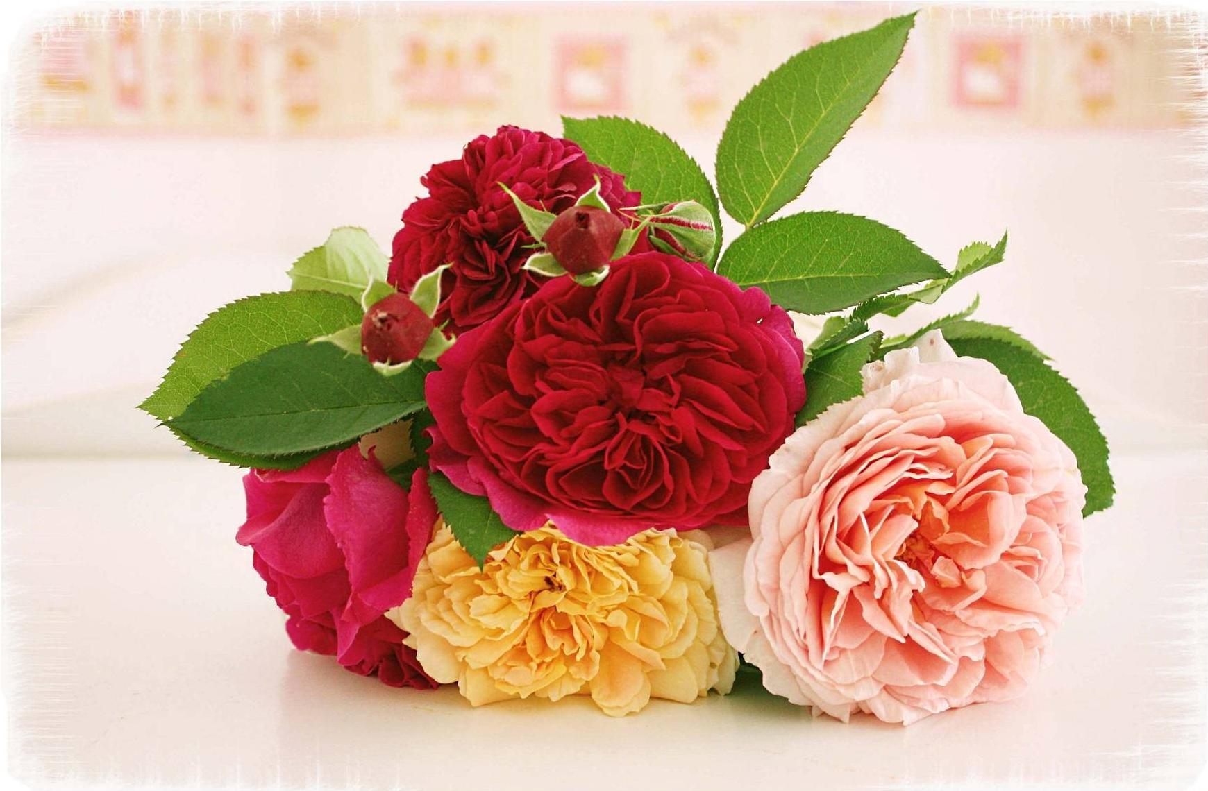 64126 скачать обои Цветы, Листья, Букет, Лежать, Размытость, Розы - заставки и картинки бесплатно