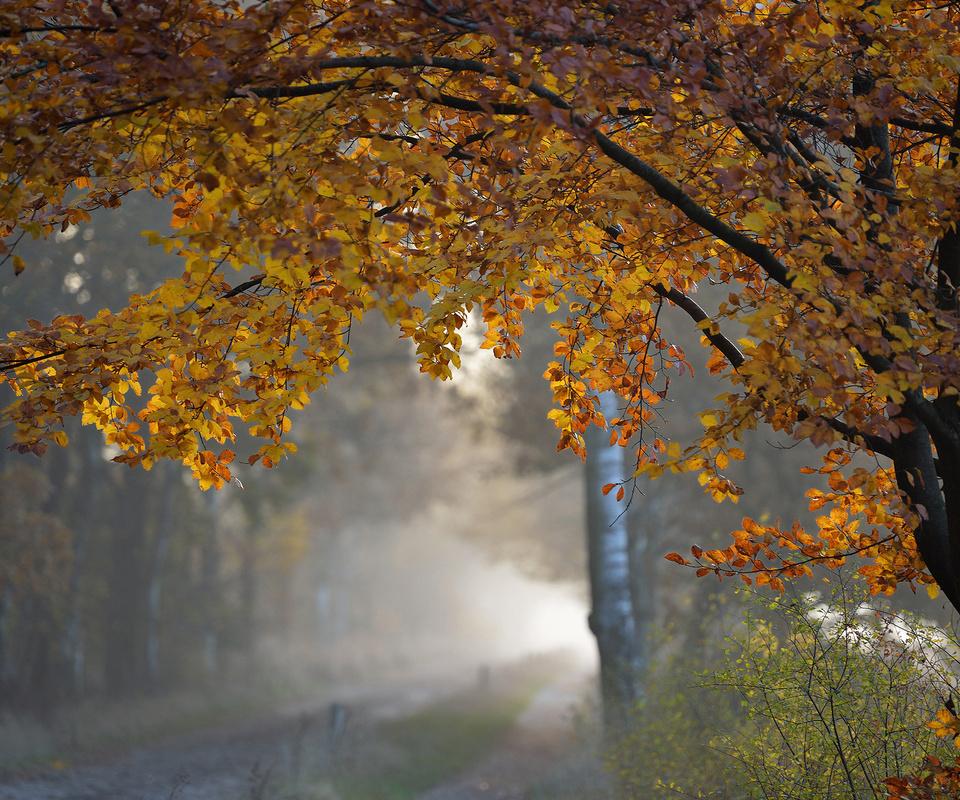 22389 скачать обои Пейзаж, Деревья, Дороги, Осень - заставки и картинки бесплатно